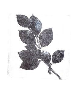Empreinte botanique Branche de bouleau sur Angela Peters