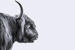 Schotse Hooglander stier van Sander van Driel