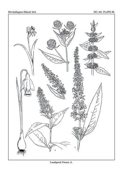 Flores notitia kaart A van Zoë Hoetmer