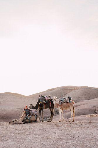 Kamelen bij zonsondergang in de woestijn van Marokko van Yaira Bernabela