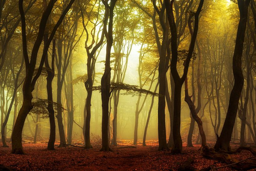 Spectres in the Fog. van Inge Bovens