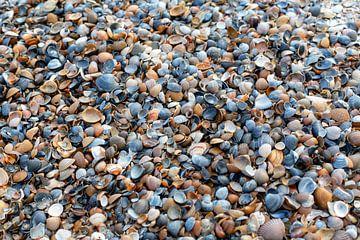 Schelpen op het strand van MSP Canvas