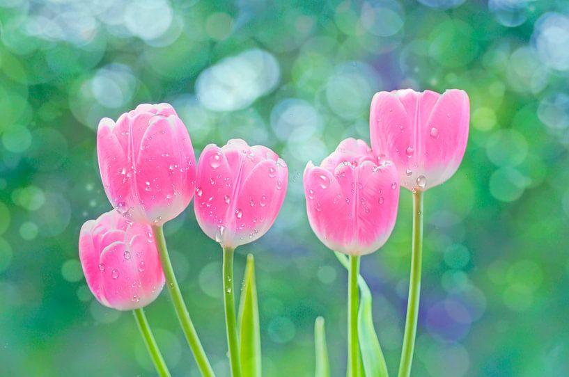 Tulpen van Jeannette Penris