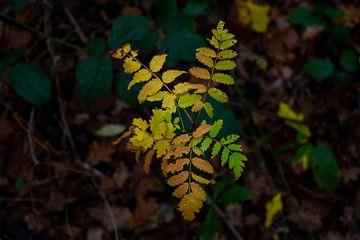 Herbstlaub im Wald von wiesje van den broek