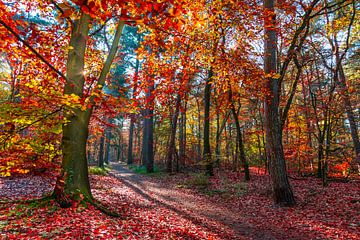 feu de forêt en automne sur Danny den Breejen