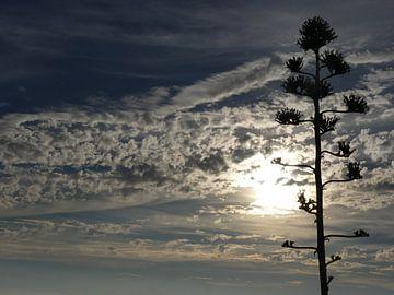 Tree van Helen Bouma