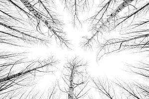 Schwarze und weiße Bäume von Davy Hansen