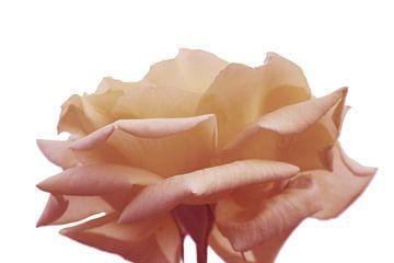 Roos van Carmen Fotografie