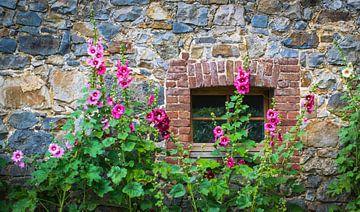 stokrozen voor een oude natuurstenen muur van Rietje Bulthuis