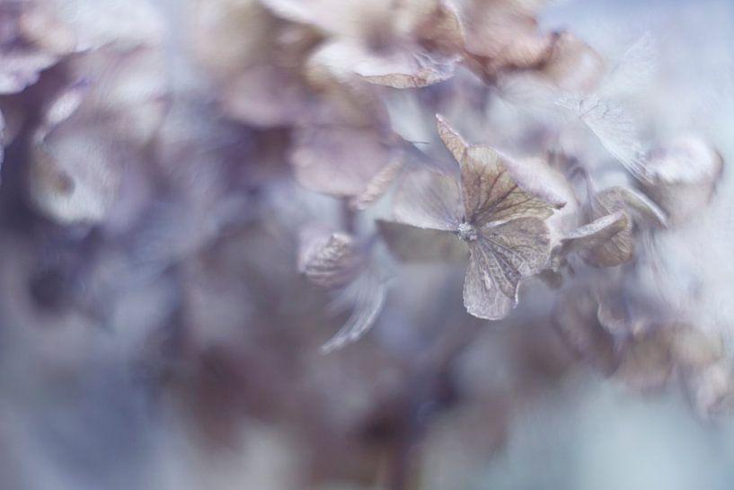 Faded Beauty van LHJB Photography