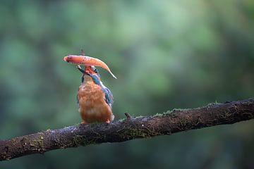 Eisvogel mit Beute von Rianne van Diemen
