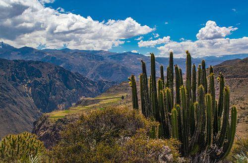 Wandeling langs de Colca Canyon, Peru