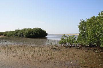 Nieuwe mangrove van Mr Greybeard