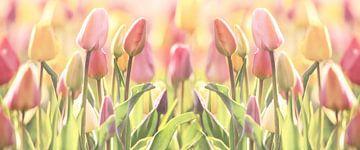 Tulpen Zauber in Pastell von Tanja Riedel