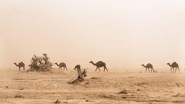 Kamelen van Herwin Wielink