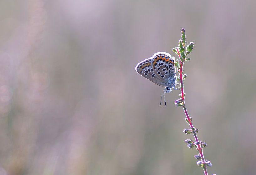 Vlinder in het roze van Vince Pellegrom