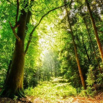 Lichtung im Wald bei Sonnenschein von Günter Albers