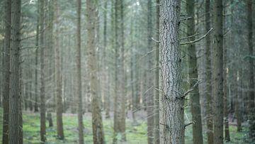 Tree lines von Jelle Dekker