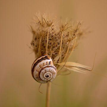Schnecke auf einer trockenen Pflanze. von J. van Schothorst