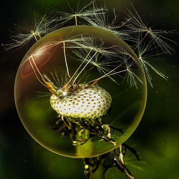 In de glazen bol - Dandelion van Christine Nöhmeier