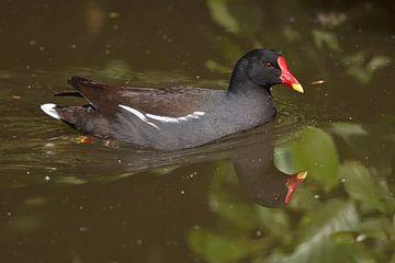 Wasservögel : DIergaarde Blijdorp von Loek Lobel
