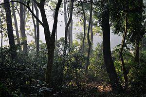 Zonsopkomst @ Chitwan National Park