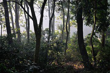 Zonsopkomst @ Chitwan National Park van Wiljo van Essen