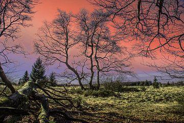 Dramatisch landschap met droge bomen bij zonsondergang van Gottfried Carls