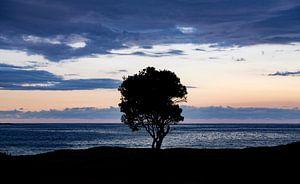 Silhouet van een boom van