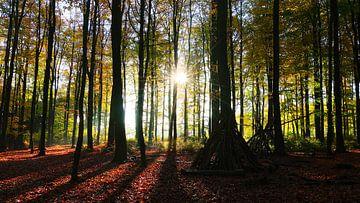 Bomen En Schaduwen van Daphne Photography