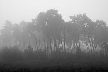 Kiefern im Nebel von Cor de Hamer