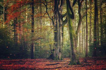 Herbstlicher Wald von Ellis Pellegrom