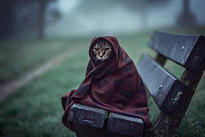 Chat dans la couverture