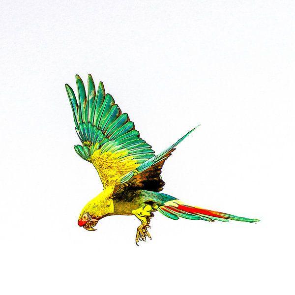 vliegende regenboog