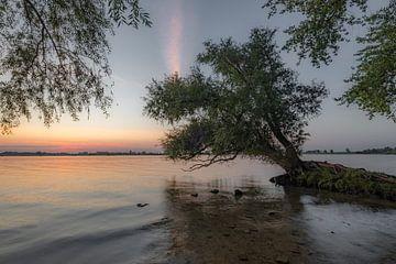 Boomwortels - mangrove van Moetwil en van Dijk - Fotografie