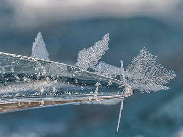 Les cristaux de glace sur Joanne de Graaff