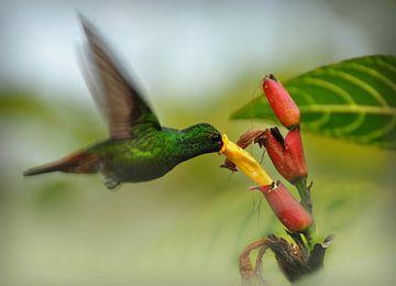 Kolibri und Blume von Catalina Morales Gonzalez