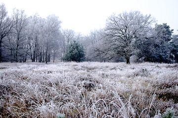 Winterlandschap op de Kampina von H Verdurmen