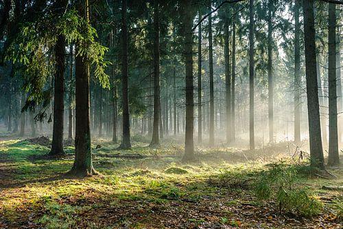 Pijnenburg, naaldbos in de mist met zonnestralen van Martin Stevens