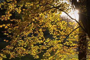 Zon en herfst van