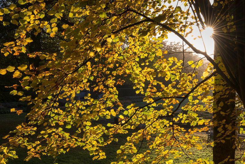 Zon en herfst von Rob IJsselstein