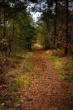Waldweg im Herbst von Carla van Zomeren
