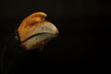 Vogel van Saskia Hoks