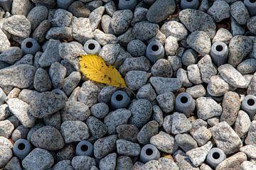 Stenen pad in Japanse tempel van