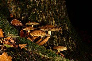Een paddenstoelen dorp. van