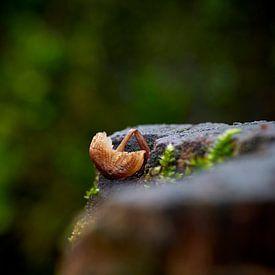 Gebroken paddenstoel op oude boomstronk van Jenco van Zalk