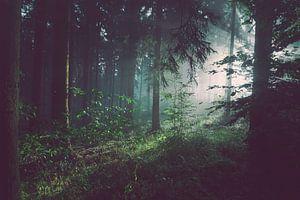 Donker bos met zonnestralen van