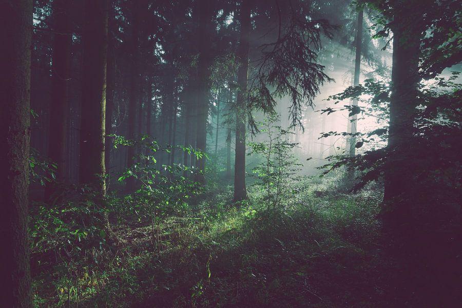 Donker bos met zonnestralen