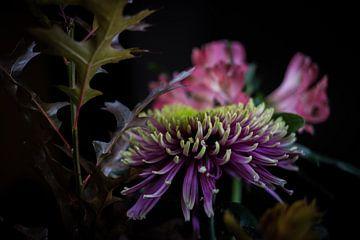 Bolchrysantheme von Eric van der Gijp
