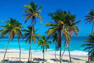 Strand op Barbados in de Caraïben van Corno van den Berg